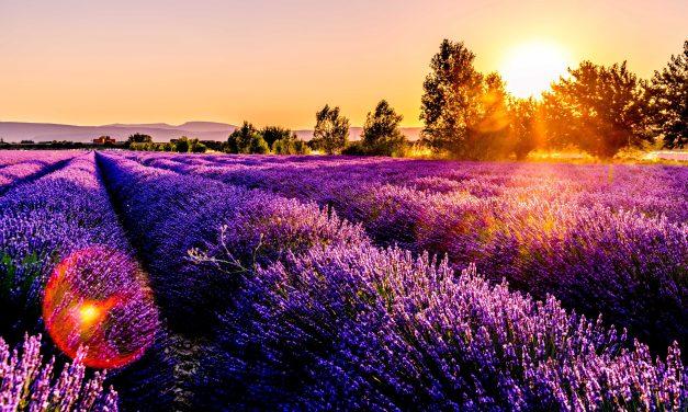 Saveurs de Provence dans le Pacific Northwest