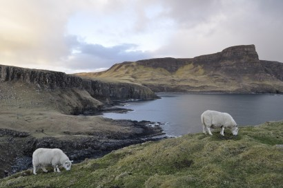 Sheep on Neist Point. This little (big) area felt like quintessential Scotland.