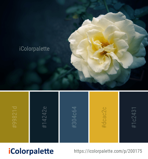Color Palette Ideas From Flower White Rose Family Image Icolorpalette