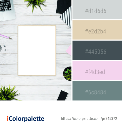 Color Palette Ideas from Pink Picture Frame Mirror Image ...