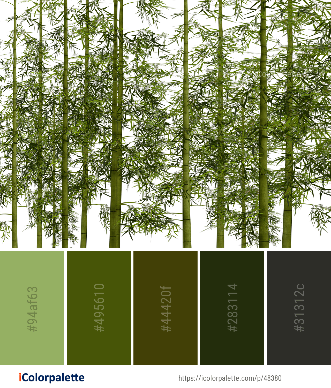 Color Palette ideas from 2 Bamboo Images   iColorpalette