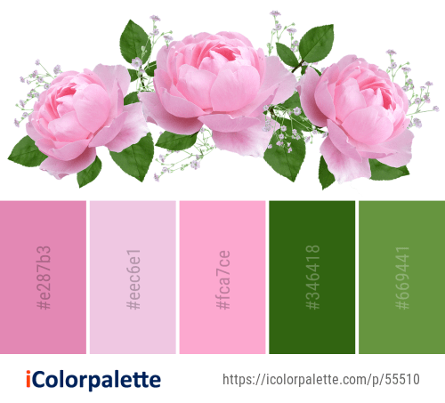 Color Palette ideas from 1172 Rose Family Images   iColorpalette