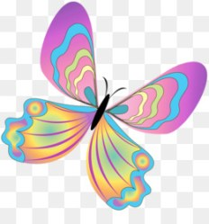 Butterfly Drawing PNG white butterfly drawing butterfly drawing cartoon butterfly drawings black and white simple butterfly drawing butterfly drawings in color small butterfly drawings cartoon butterfly drawing easy basic butterfly drawing butterfly