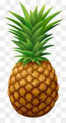 Pineapple PNG Pineapple Vector Cartoon Pineapple Pineapple Fruit Pineapple Drawing Pineapple Background Pineapple Illustration Pineapple Cocktail Pineapple Wallpaper Pineapple Outline Pineapple Art Pineapple Monogram CleanPNG / KissPNG