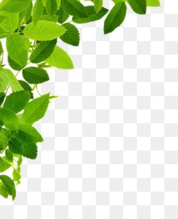 Leaf Frame Png : frame, Frame, CleanPNG, KissPNG
