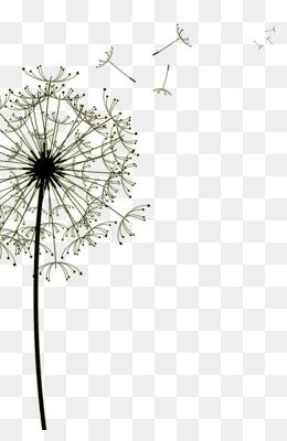 Falling Feathers Wallpaper Drawing Dandelion Clip Art Dandelion Png Download 1006