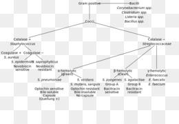 Endotoxin Gram-negative bacteria Gram-positive bacteria
