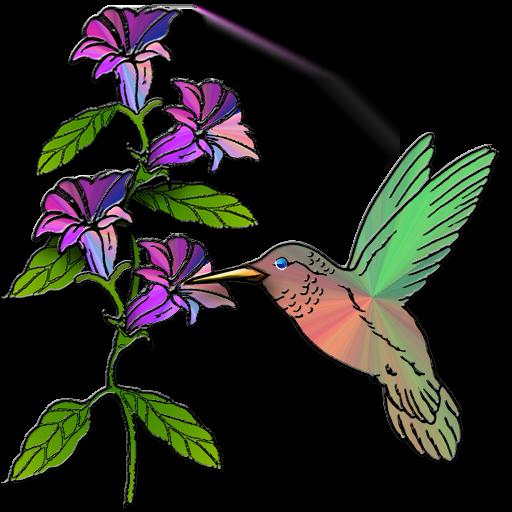 hummingbird icondoit