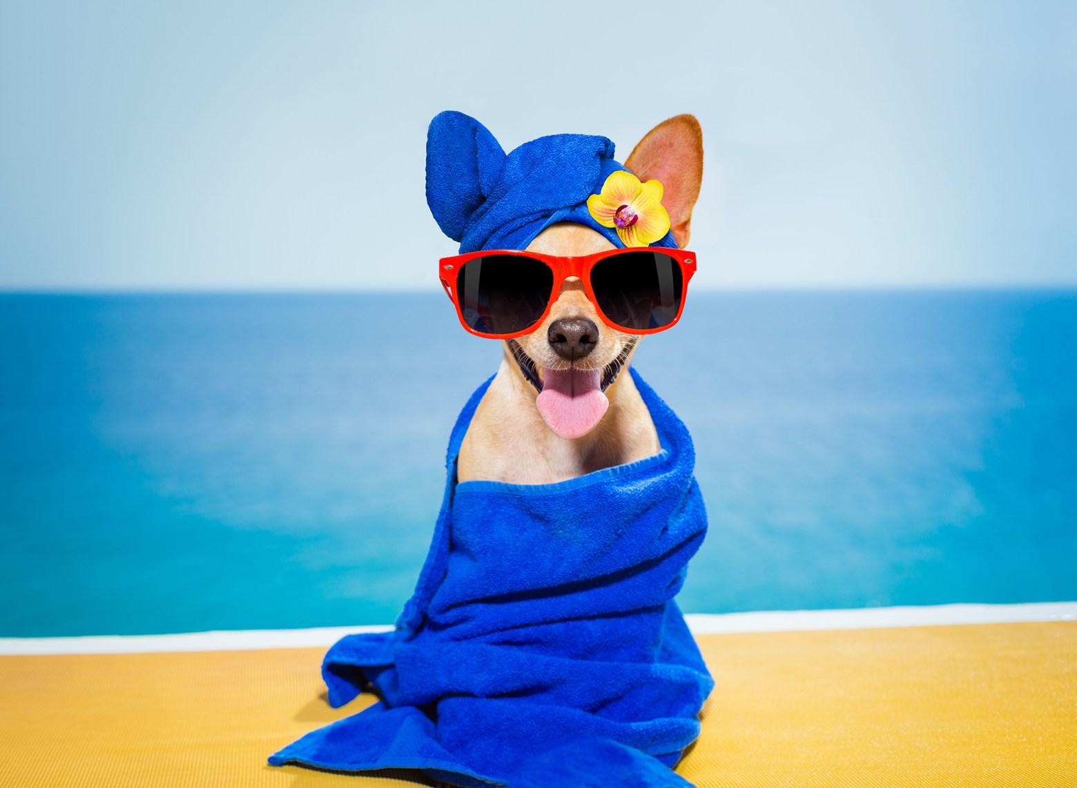 Dog Spa Hotel