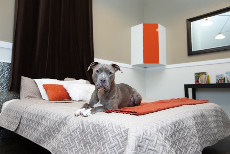 Wag Hotels dog suite
