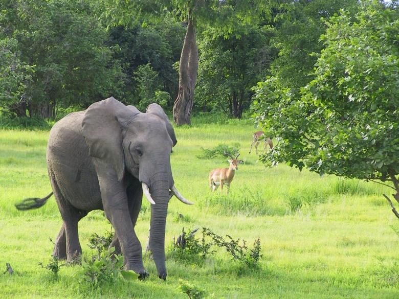 Zambia Elephant Abercrombie & Kent Safari Tours