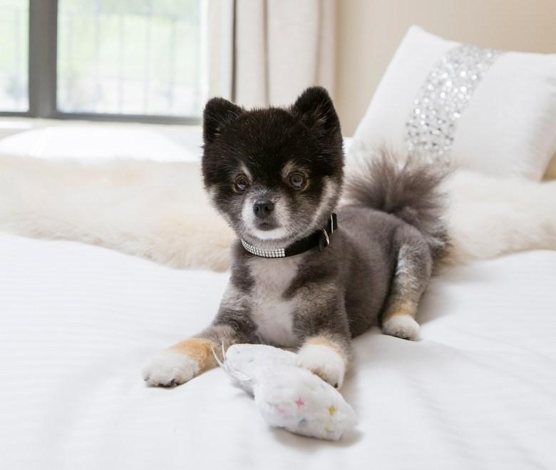 Fairmont Princess AZ luxury pet hotel