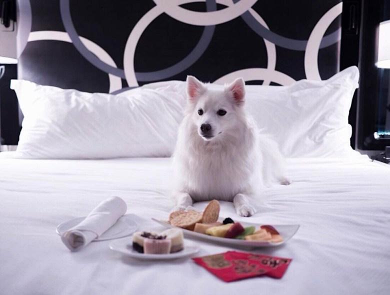 Kimpton Muse luxury pet hotel