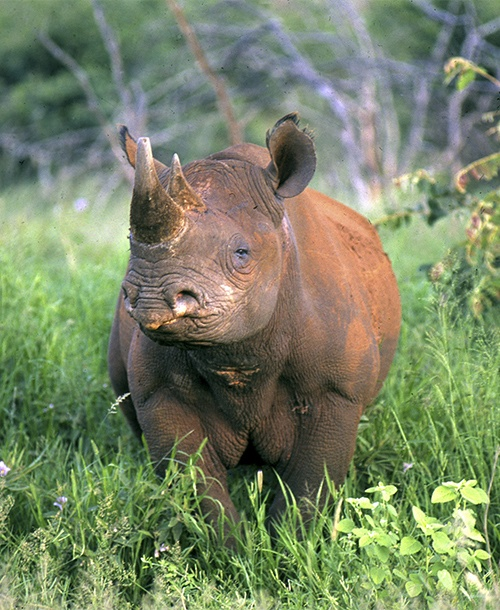 Rhino Conservation Safari KwaZulu Agrica