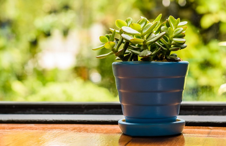 best house plant for air quality jade plant