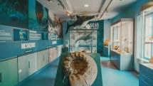 Rotunda Museum Scarborough