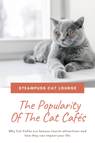 Iconic Magazine Online Steampuss cat Lounge cat cafe