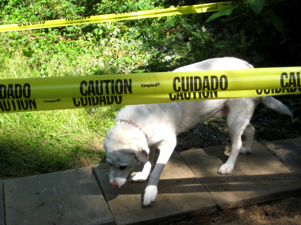 caution-dog
