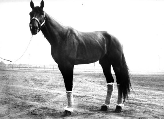 JAMIN003-72