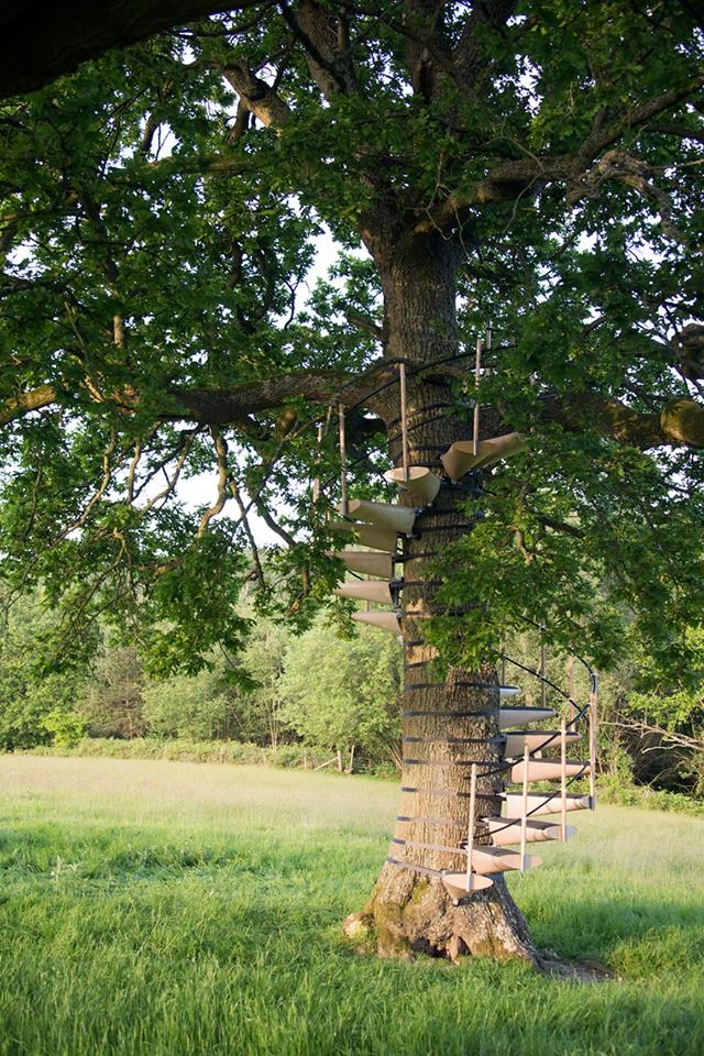 Spiral Staircase For Your Backyard Tree Icreatived | Spiral Staircase Tree Trunk
