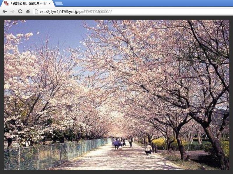 [賞櫻][名所] 四國區域 公園中的百變櫻景-欣日本-欣傳媒旅遊頻道