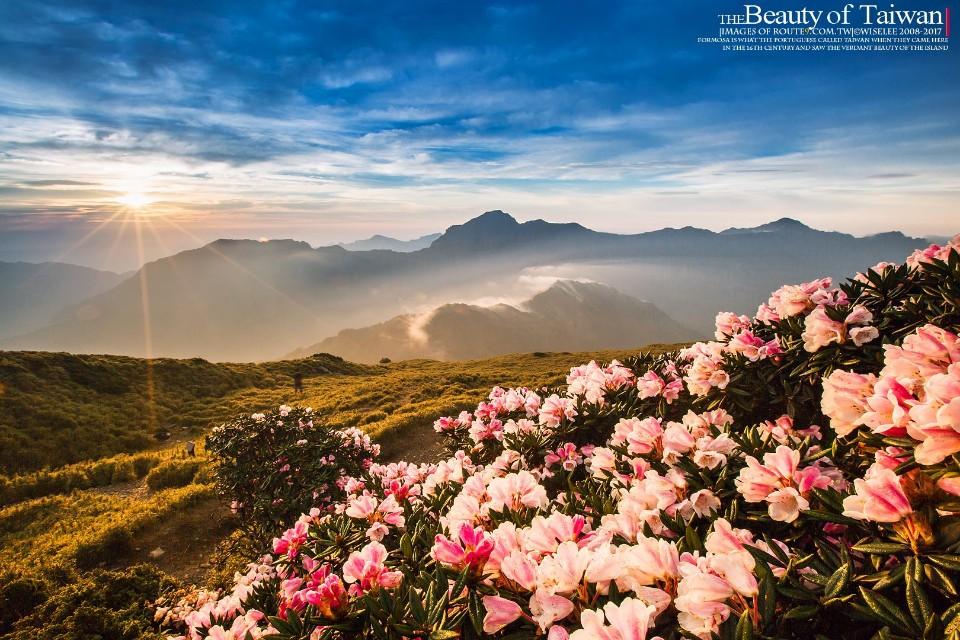 2018 合歡山高山杜鵑開花囉! 準備好迎接5月的杜鵑花季了嗎?-欣攝影-欣傳媒攝影頻道
