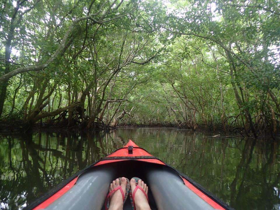 ﹝菲律賓海底世界﹞薄荷島還可以這樣玩!劃獨木舟穿梭紅樹林-大錚-欣傳媒旅遊頻道