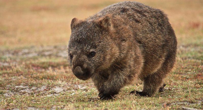 奇趣澳洲 12種昆士蘭代表性動物-欣旅遊BonVoyage-欣傳媒旅遊頻道