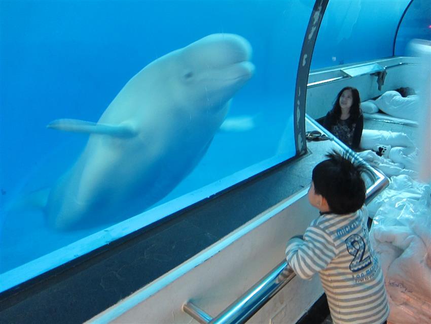 親子出遊 夜宿海生館小白鯨陪睡 夜探超刺激-欣臺灣-欣傳媒旅遊頻道