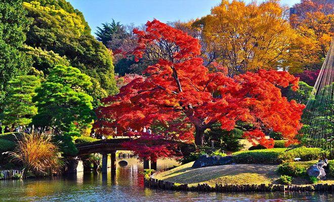 秋意濃,賞楓紅──日本前三名超人氣紅葉景點-DingTaxi叮叮包車-欣傳媒旅遊頻道