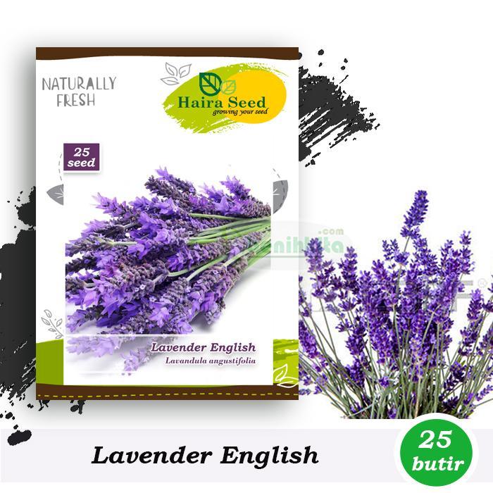 Benih-Bibit Bunga Lavender English (Haira Seed)