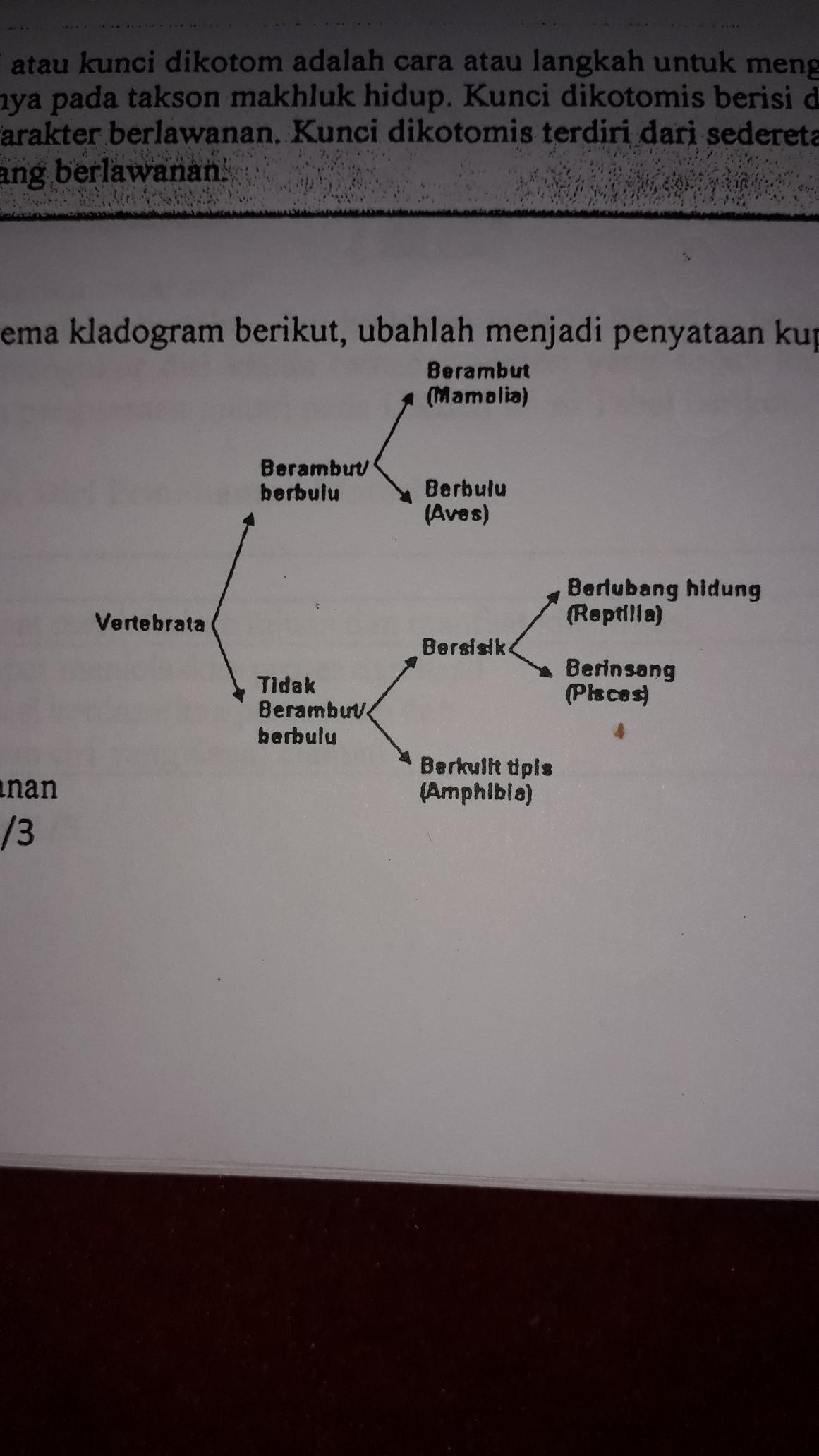 Contoh Kunci Dikotom : contoh, kunci, dikotom, Contoh, Kunci, Determinasi, Beserta, Jawabannya, Kanal, Jabar