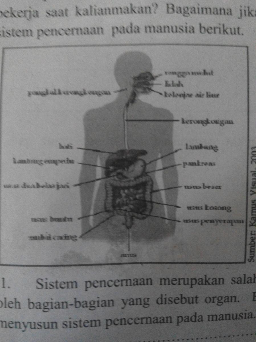 Sebutkan Organ-organ : sebutkan, organ-organ, Gambar, Disamping,, Sebutkan, Organ, Penyusun, Sistem, Pencernaan., Brainly.co.id