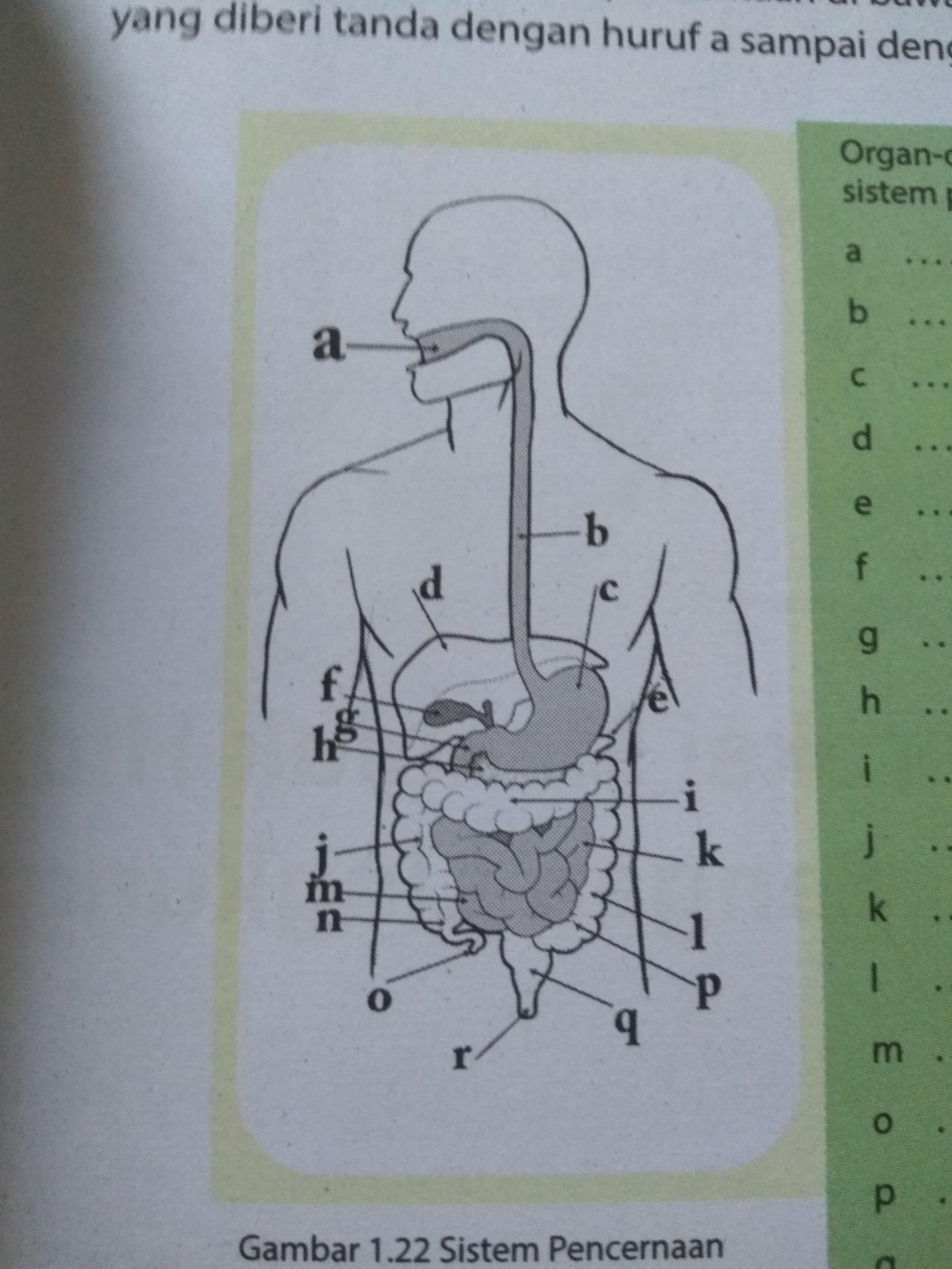 PDF Sel, Jaringan, Organ, Dan Sistem Organ