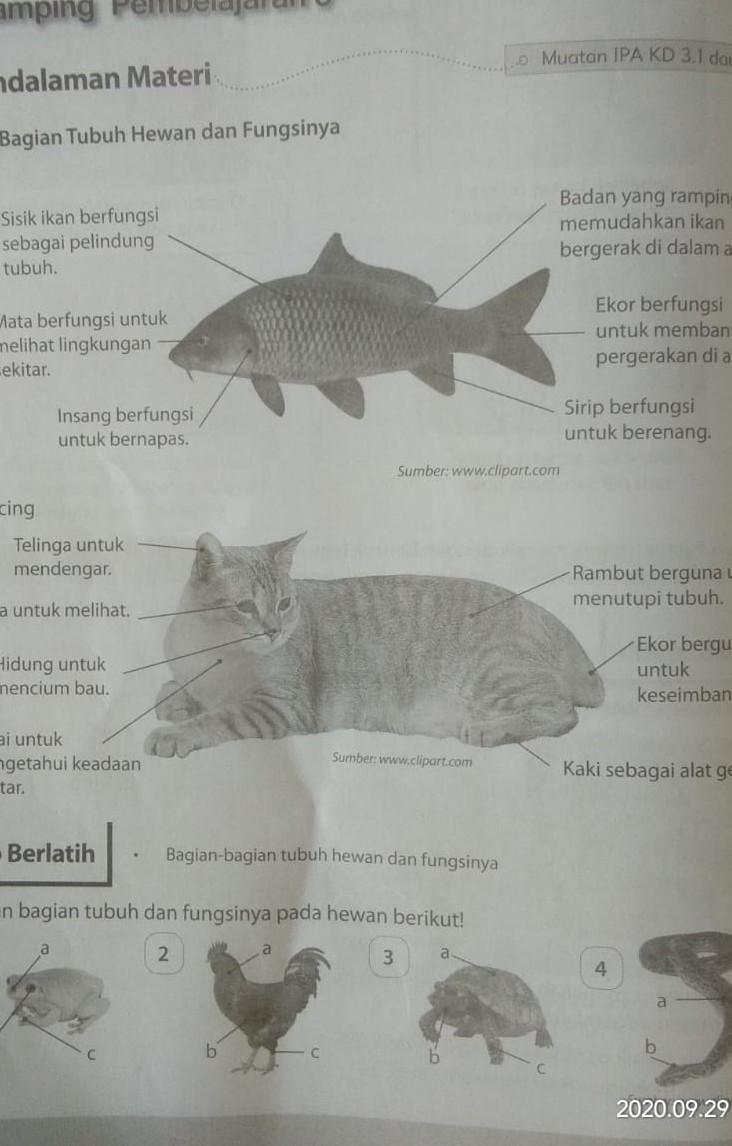 Bagian Bagian Ikan Dan Fungsinya : bagian, fungsinya, Tuliskan, Bagian, Tubuh, Fungsinya, Hewan, Berikut!, Tolong, Bantu, Brainly.co.id