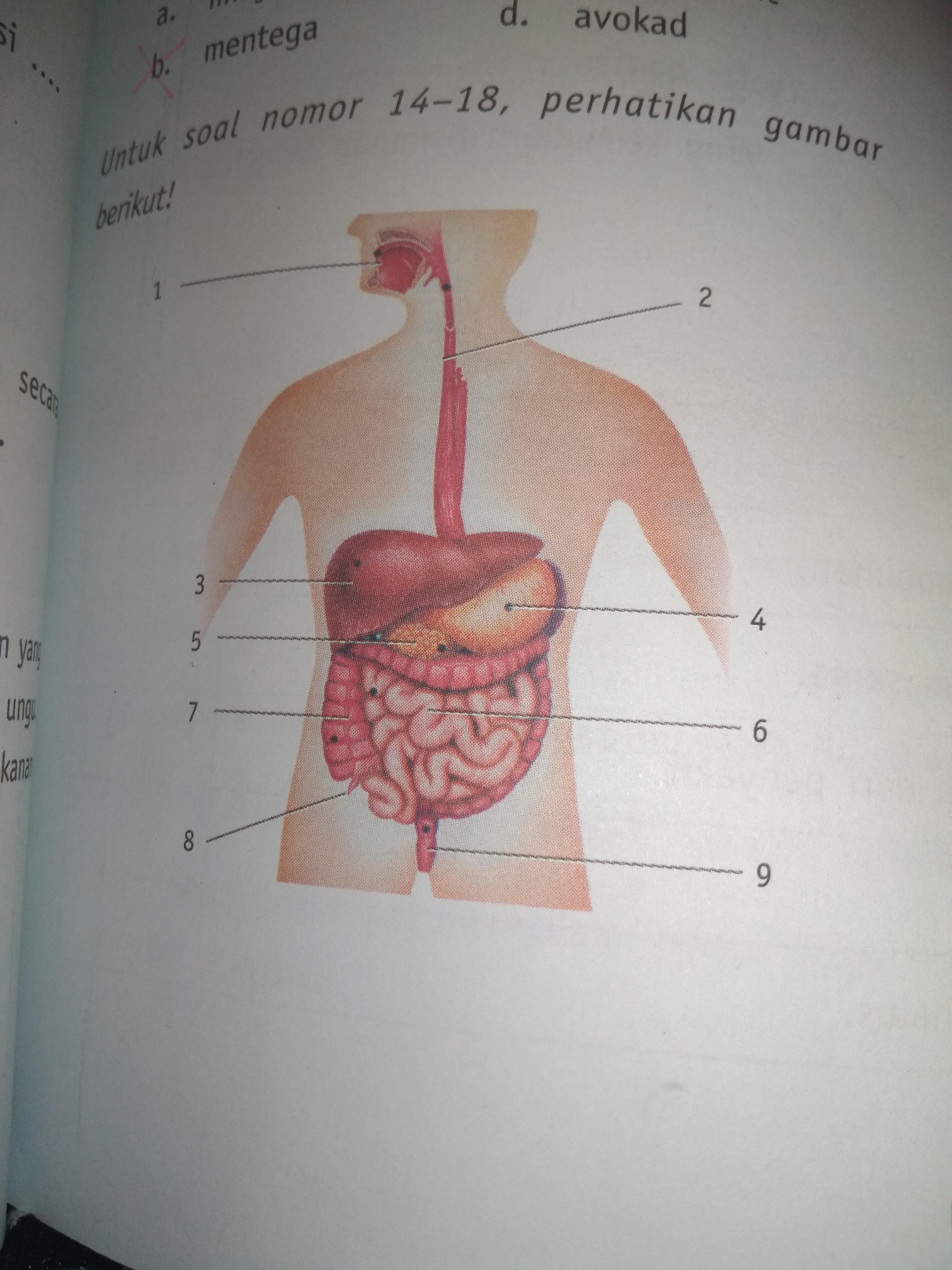 Pencernaan Kimiawi Dan Mekanik : pencernaan, kimiawi, mekanik, 14.proses, Pencernaan, Secara, Mekanik, Kimiawi, Dapat, Terjadi, Organ, Nomor..., Brainly.co.id