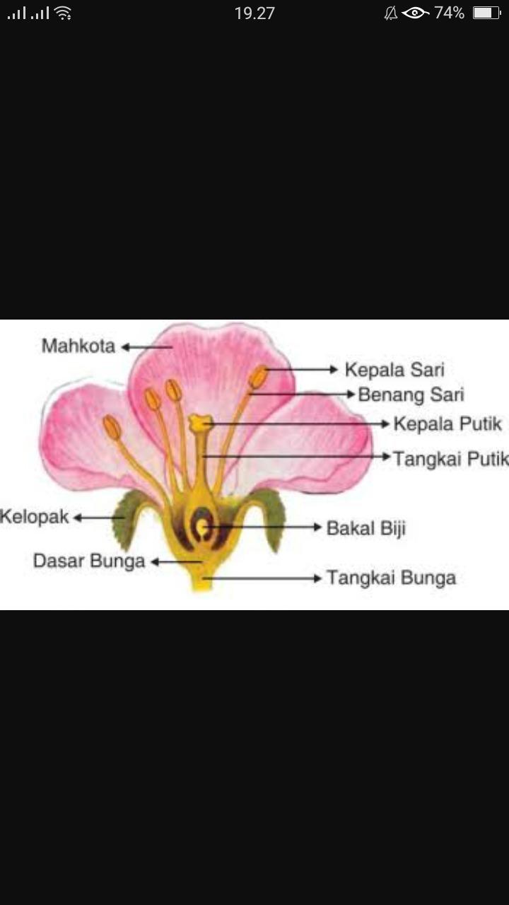 Bagian Bagian Bunga Sempurna : bagian, bunga, sempurna, Gambarlah, Sebutkan, Bagian, Bunga, Sempurna, Brainly.co.id
