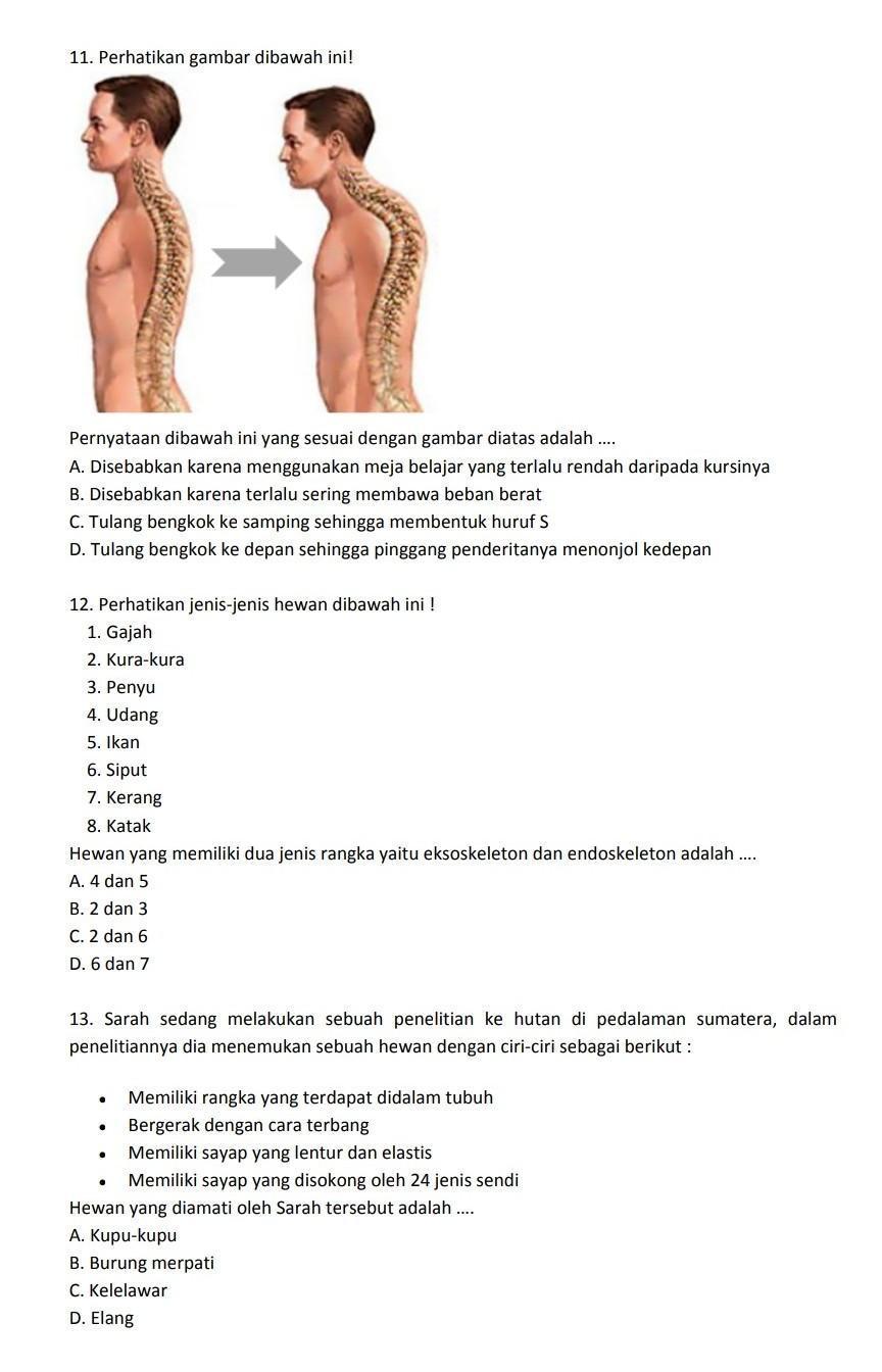 Tulang Bengkok Ke Depan : tulang, bengkok, depan, Tolong, Jawab, Brainly.co.id