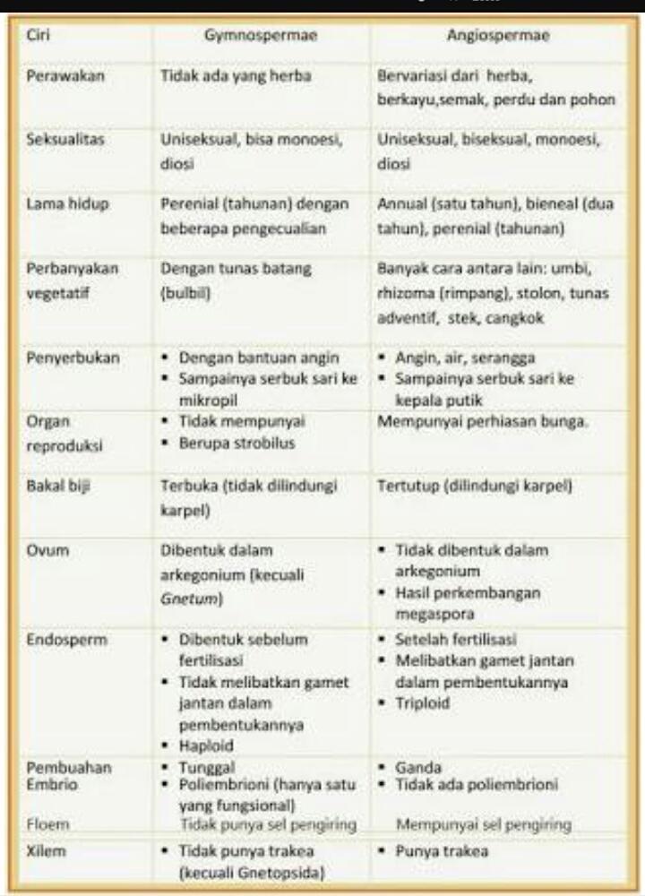 Angiospermae Adalah : angiospermae, adalah, Buatlah, Tabel, Menggambarkan, Perbedaan, Antara, Ciri-ciri, Gymnospermae, Angiospermae!, Brainly.co.id