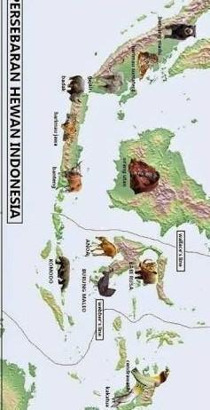 Peta Persebaran Nenek Moyang Bangsa Indonesia : persebaran, nenek, moyang, bangsa, indonesia, Persebaran, Nenek, Molyang, Bangsa, Indonesia, Brainly.co.id