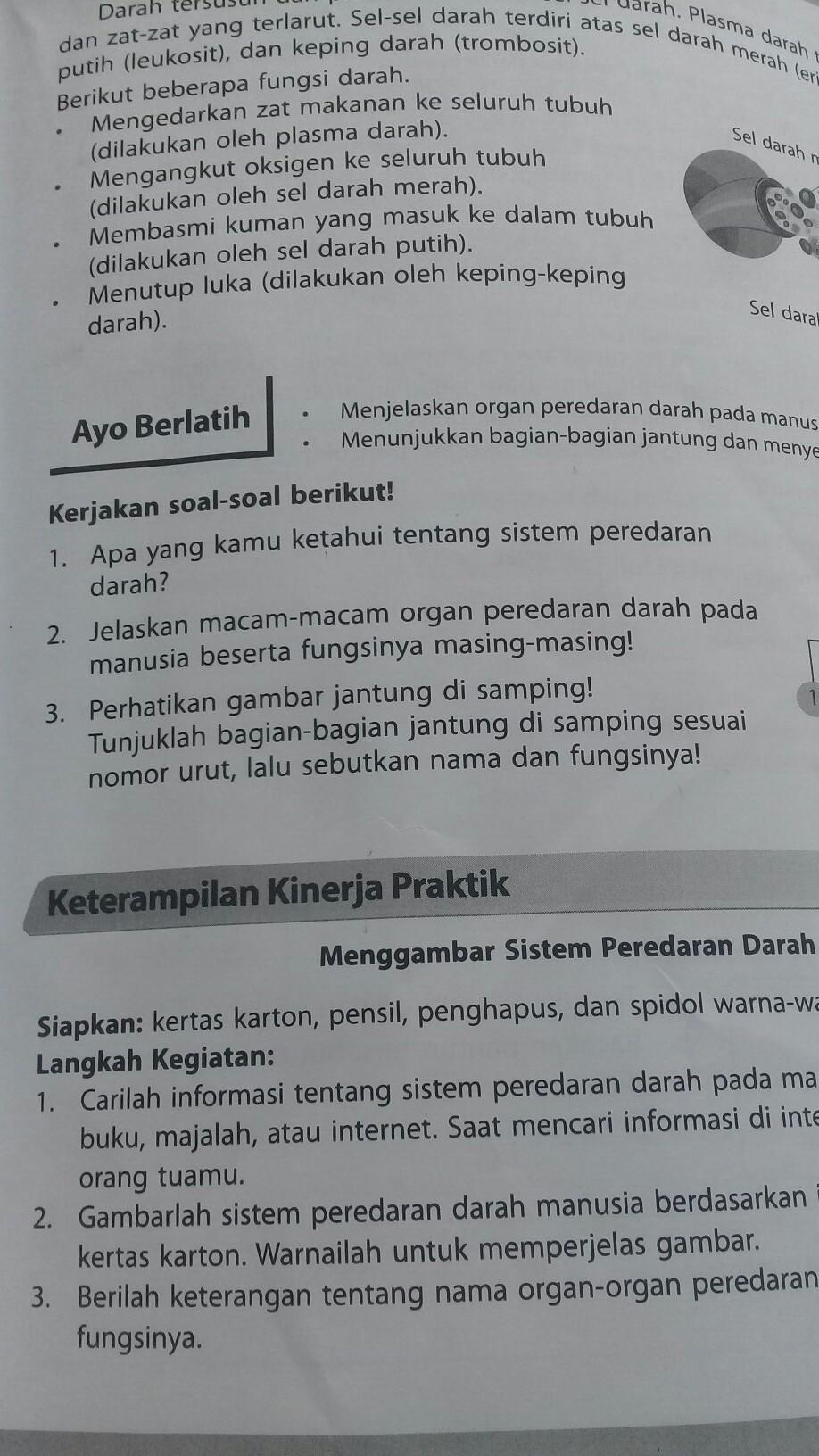 Jelaskan Macam : jelaskan, macam, Jelaskan, Macam, Organ, Perdaran, Darah, Manusia, Beserta, Fungsinya, Masing, Brainly.co.id