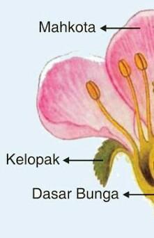 Bagian Bagian Bunga Sempurna : bagian, bunga, sempurna, Gambar, Bunga, Sempurna, Bagiannya, Ngetrend, VIRAL