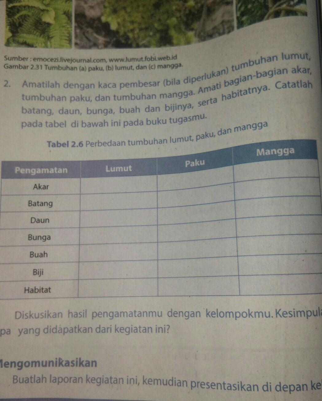 Tabel 2.6 Perbedaan Tumbuhan Lumut Paku Dan Mangga : tabel, perbedaan, tumbuhan, lumut, mangga, Perbedaan, Tumbuhan, Lumut, Mangga, Python