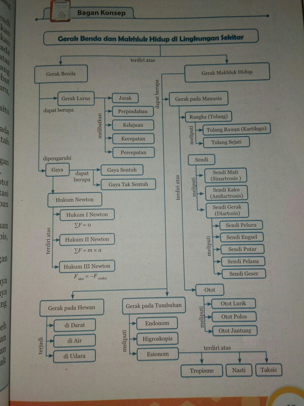 Sistem Gerak Pada Makhluk Hidup Bagis