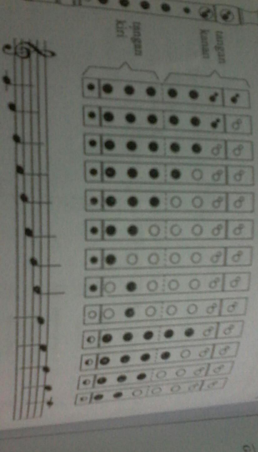 Tangga Nada Recorder : tangga, recorder, Gambarkan, Musik, Recorder, Dengan, Sebagai, Brainly.co.id
