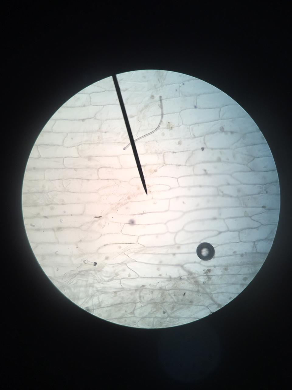 Mengapa Mikroskop Merupakan Sesuatu Yang Sangat Berguna Untuk Mempelajari Sel : mengapa, mikroskop, merupakan, sesuatu, sangat, berguna, untuk, mempelajari, Megapa, Mikroskop, Merupakan, Sesuatu, Sangat, Berguna, Untuk, Mempelajari, Sel?jelaskan, Brainly.co.id