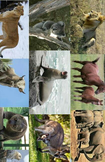 Hewan Vivipar Disebut Juga Hewan Mamalia Karena : hewan, vivipar, disebut, mamalia, karena, Sebutkan, Contoh, Hewan, Mamalia, Vivipar, Brainly.co.id