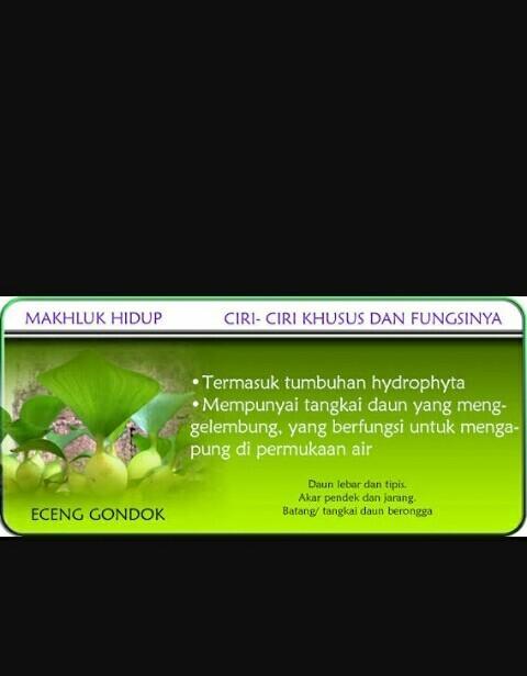Ciri Khusus Enceng Gondok : khusus, enceng, gondok, Khusus, Eceng, Gondok, Brainly.co.id