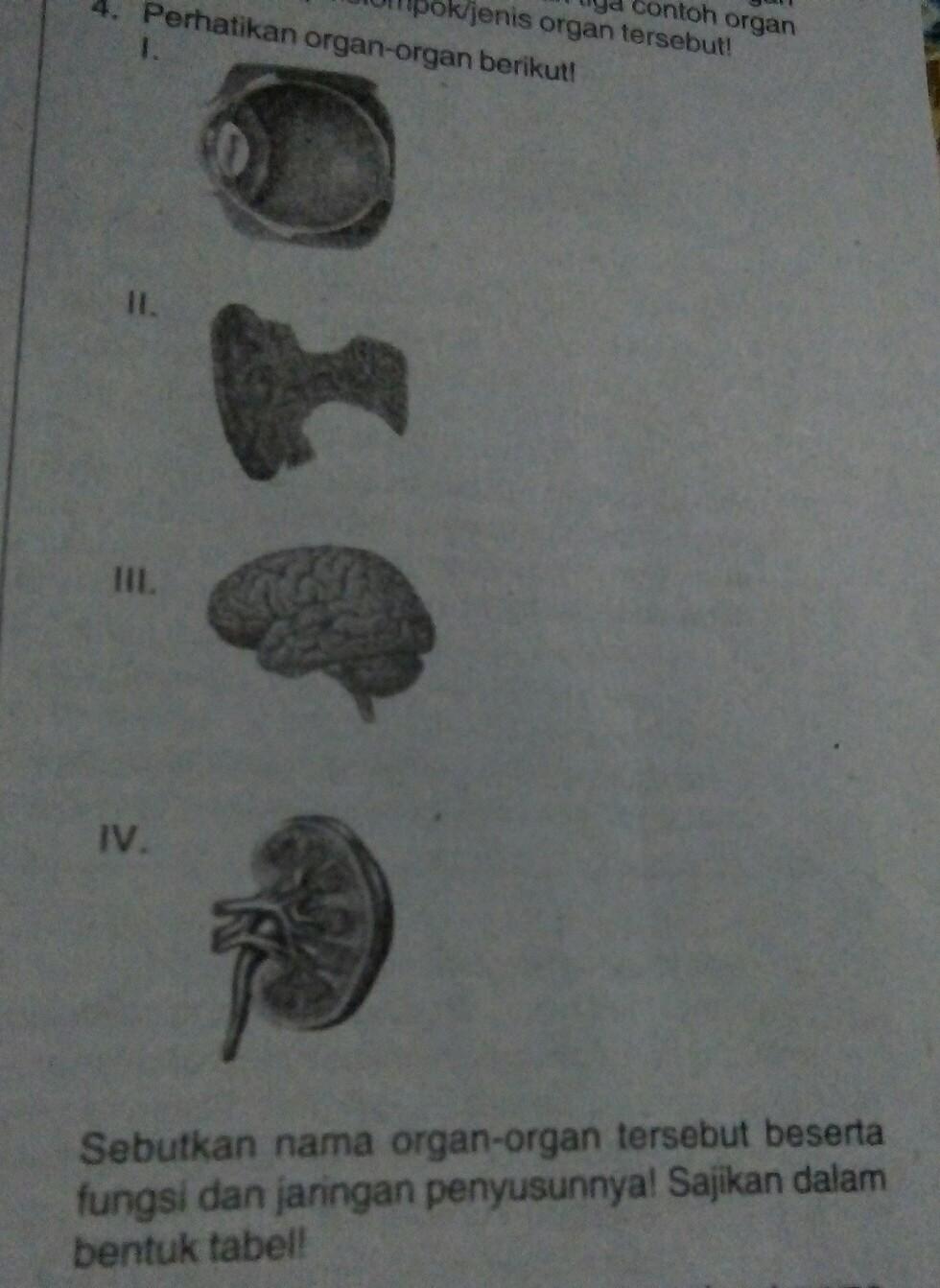Sebutkan Nama Anggota Tubuh Manusia Dan Fungsinya : sebutkan, anggota, tubuh, manusia, fungsinya, Sebutkan, Organ, Tersebut, Beserta, Fungsi, Jaringan, Penyusunnya!, Brainly.co.id