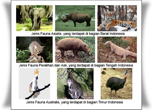 gambar flora dan fauna di indonesia bagian barat  Brainly